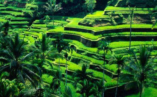 Экзотические туры в Индонезию